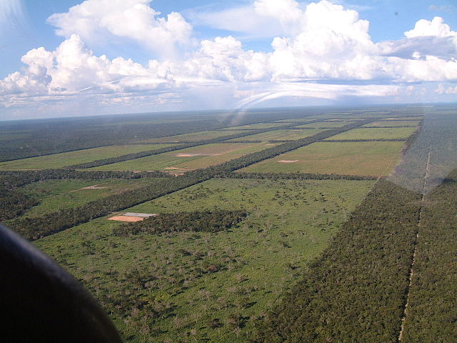 Tropical deforestation for cattle grazing in Praguay's Gran Chaco